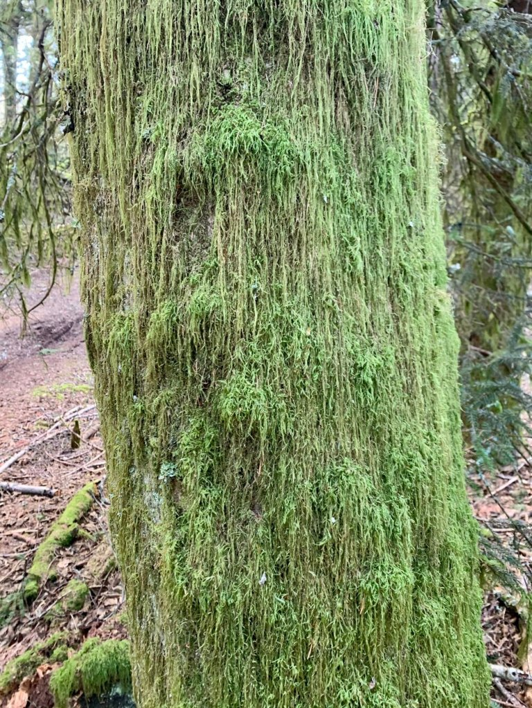 The Grinch's fur in moss