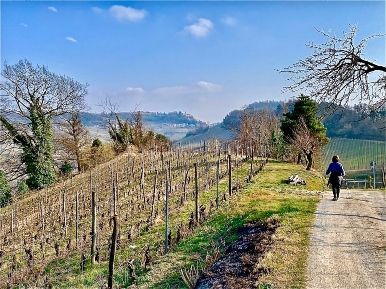 Hiking the vineyards of   Barolo   in early spring